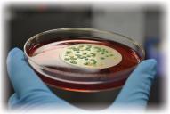 Coliform/ E.coli, TVC & P.A. (Lab Test)