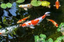 Pond & Aquarium